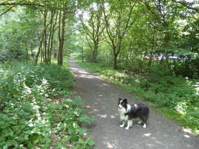 A694 Woodland dog walk, Tyne and Wear - Driving with Dogs