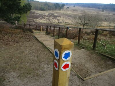 A149 Nature reserve walk with full-on birdsong, Norfolk - Driving with Dogs