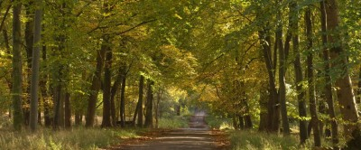 Savernake Estate dog walks, Wiltshire - Driving with Dogs