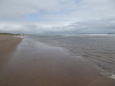 Lovely long dog-friendly beach, Northumberland - Driving with Dogs