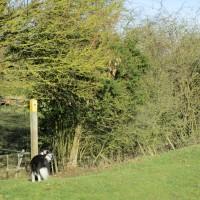 Dog-friendly village pub and dog walk near Shipston, Warwickshire - Warwickshire dog-friendly pub and dog walk.JPG