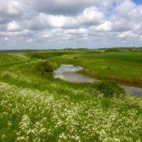 Stunning marshland dog walk and dog-friendly pub nearby, Essex - Essex marshes dog walk.jpg