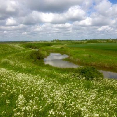 Stunning marshland dog walk and dog-friendly pub nearby, Essex - Driving with Dogs