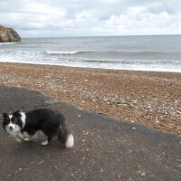 Unique dog-friendly beach near Seaham, County Durham - P1020673.JPG