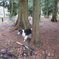 Woodland dog walk near Frensham, Hampshire - Surrey dog walks.JPG
