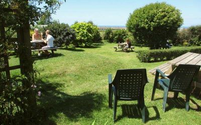 Dog-friendly pub and camping, Cornwall - Driving with Dogs