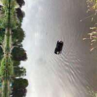 North Inch park and garden, Scotland - 62114DF7-EDEE-40B7-B74F-C36E8A62A9A0.jpeg