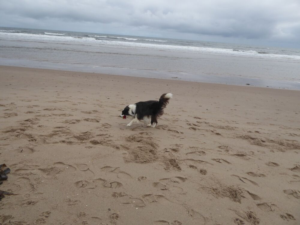 Lovely long dog-friendly beach, Northumberland - Dog-friendly beach in Northumberland